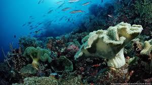 Los cinco mayores peligros para los océanos del mundo | Ecología | DW |  07.06.2017