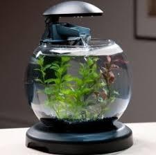 aquarium for office. Www.squidoo.com Aquarium For Office I