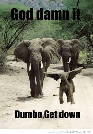 Elephant Quotes Impressive Baby Elephant Quote Quote Number 48 Picture Quotes