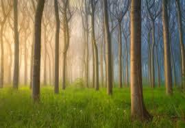 Misty Morning Fotobehang Behang Bestel Nu Op Europostersbe