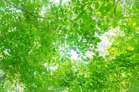夏の木漏れ日無料の写真素材はフリー素材のぱくたそ