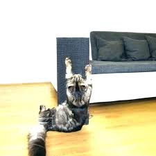 best couch for cats glorious couch cover for cats for couch cover for cats sofa protector