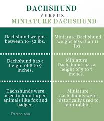 Mini Dachshund Size Chart Difference Between Dachshund And Miniature Dachshund