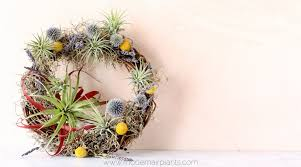 diy air plant gifts fast easy