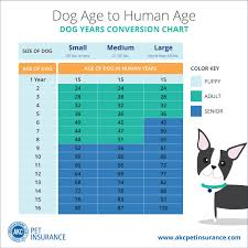 Dog Age Chart By Weight Dog Years To Human Years