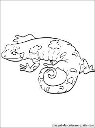 Disegni Salamandra Da Colorare E Stampare Disegni Da Colorare Gratis