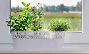 how to grow herbs indoors the home depot