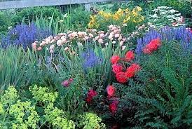 Small Picture Creating a Cut Flower Garden for Fun and Profit Your Easy Garden