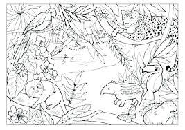Amazon Rainforest Animals Colouring Pages Australian Free Animal