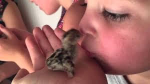 radley kissing a baby bird  radley kissing a baby bird