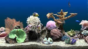Fish Tank Marine Aquarium Virtual Fishtank Youtube