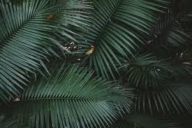 daintree rainforest australia botanical