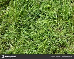 wild grass texture. Wild Grass On Meadow \u2014 Stock Photo Wild Texture