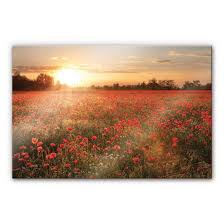 Acrylglasbild Mohnblumen Im Sonnenuntergang Romantische Kulisse