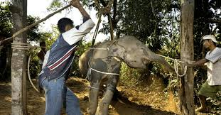 Image result for mason elephant lodge cruelty