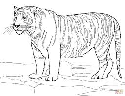 Small Picture Standing Bengal Tiger coloring page Free Printable Coloring Pages