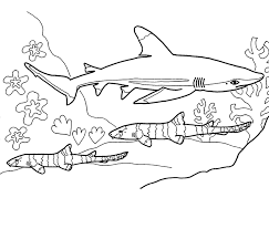 Small Picture Shark Coloring Pages 12 Coloring Kids Coloring Pages