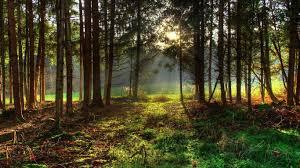 outdoor desktop backgrounds. Outdoor Desktop Backgrounds Forests Nature Trees Sunlight Following B