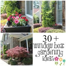Diy Window Boxes Wow Your Windows With Window Boxes Window Box And Gardens