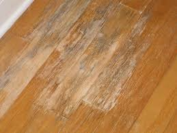 what does mold on wood floors look like