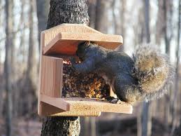 grey squirrel house plans beautiful flying squirrel houses plans squirrel house plans free gebrichmond