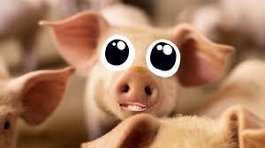 Pig Jokes | Funny Pig Jokes | Beano.com
