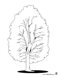 Small Picture Lime tree coloring pages Hellokidscom