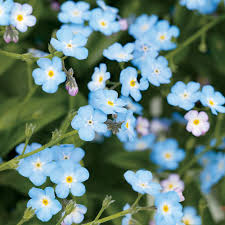 Light Blue Flower Names Paint Your Garden With Blue Flowers Sunset Magazine