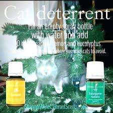 spray to keep cats away from furniture what can you spray to keep cats away spray