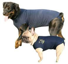stop dog from licking wound. Beautiful Dog Dog Medical Pet Shirt Cover Vest With Stop Dog From Licking Wound D