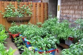 plant something long island
