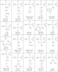 Amino Acid Chart Veritable Amino Acid Chart With Letters 2019