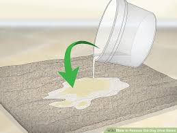 image titled remove old dog urine stains step 2