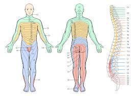 Dermatomal Pattern