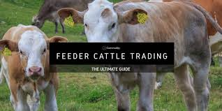 Feeder Cattle Learn How To Trade Agricultural Commodities