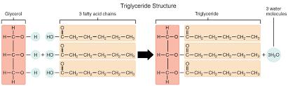 biomolecules lipids lhs cns