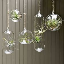 outstanding glass hanging planter terrarium design awesome wall 5 hold by australium uk south africa succulent globe bubble ball