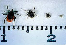 Tick Size Chart How To Identify Different Ticks