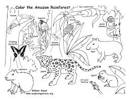 coloring pages of animals in the rainforest pretty design coloring pages animals printable rainforest animals