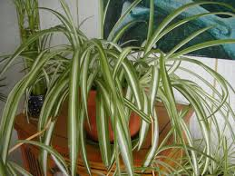 ... Garden Design with Houseplant Care Guides: Which Plants Do I Own? with  House And