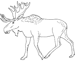 Small Picture Moose Elk Coloring Page Pages Moose Coloring Pages 18978