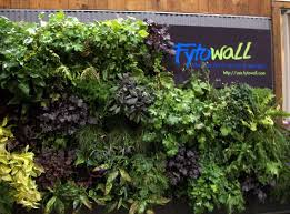 Small Picture 103 best Living Walls images on Pinterest Vertical gardens