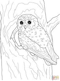 Owl Coloring Pages For Adults Free Printable Christmas Sheet Pdf