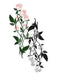 Fototapeta černé Bílé A Barevné Růže Siluetu Květinový Ornament černých