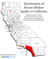 Spider Identification Chart California Cisr Brown Widow Spider