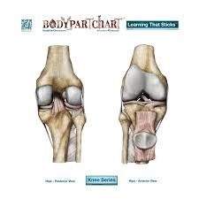 Knee Opposing Views Body Part Chart Removable Wall Graphic