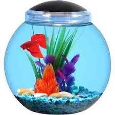 office fish. Image Is Loading 1-Gallon-Betta-Aquarium-Mini-Small-Fish-Tank- Office Fish