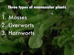 nonvascular plants