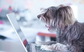 dog vomiting dog health symptoms dr