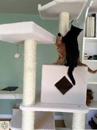 Dr. McGuire's cats Trey and Finn as kittens enjoying play time on their cat  arobic